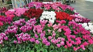 Herbert und Thomas Schneider auf dem Blumengrossmarkt Düsseldorf