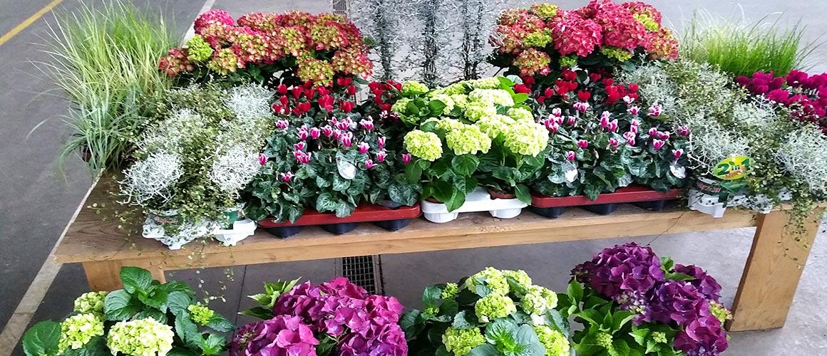 Blumengro Markt D Sseldorf Eg Neues Vom Markt