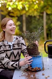 Gartenpflanze des Monats November: Stechpalme
