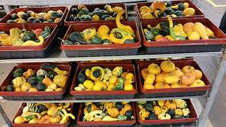 Herbstliche Impressionen auf dem Blumengrossmarkt Düsseldorf
