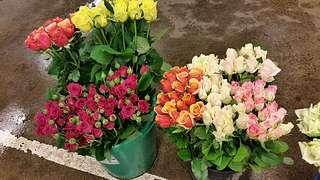 Kemper-Schürheck auf dem Blumengrossmarkt Düsseldorf