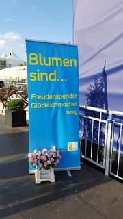 Blumengrossmarkt Düsseldorf: Open Air Kino Düsseldorf