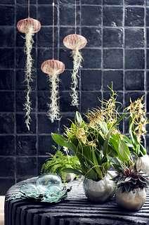Zimmerpflanze des Monats November auf dem Blumengrossmarkt Düsseldorf
