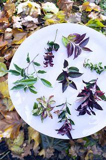 Gartenpflanze des Monats Oktober: Die Traubenheide auf dem Blumengrossmarkt Düsseldorf