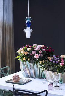 Zimmerpflanze des Monats Juli auf dem Blumengrossmarkt Düsseldorf