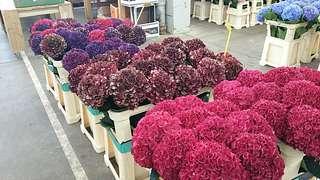 Blumengrossmarkt Düsseldorf – Urlaubsgefühle verlängern