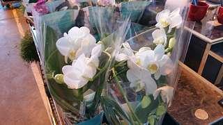 Blumengrossmarkt Düsseldorf – Unsere Orchideenspezialisten