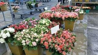 Blumengrossmarkt Düsseldorf – Regionaler Schnitt