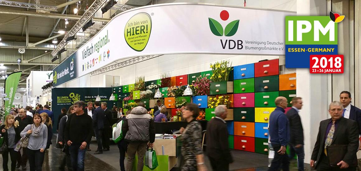 Blumengroßmarkt Düsseldorf – IPM Essen 2018